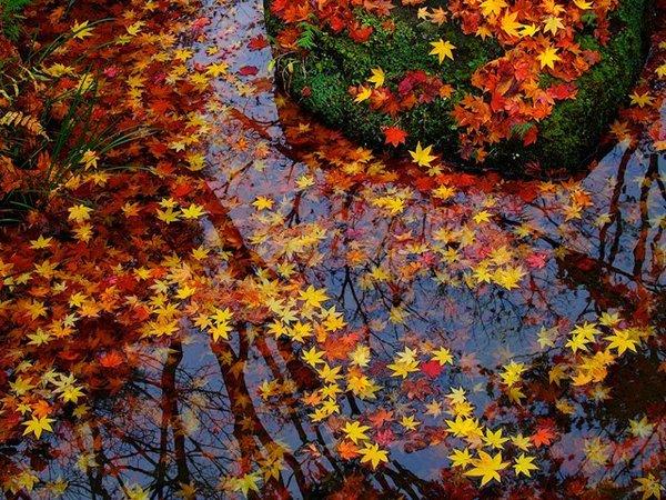 秋といえばやっぱりドライブ!関東にあるおすすめのスポット3選