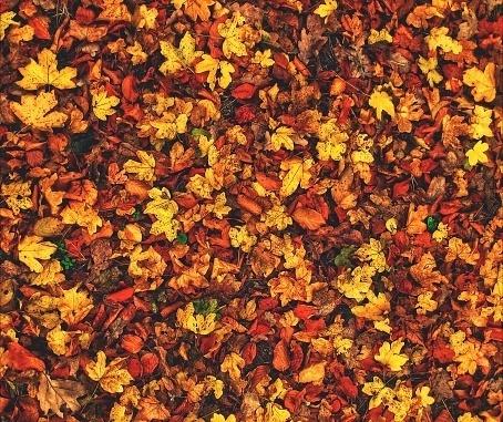 そろそろネイルも秋色にシフトチェンジ♡注目の秋ネイル2016