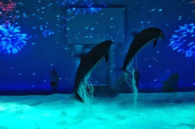 人気の水族館アクアパーク品川で、日本一のイルカショーが開催中!
