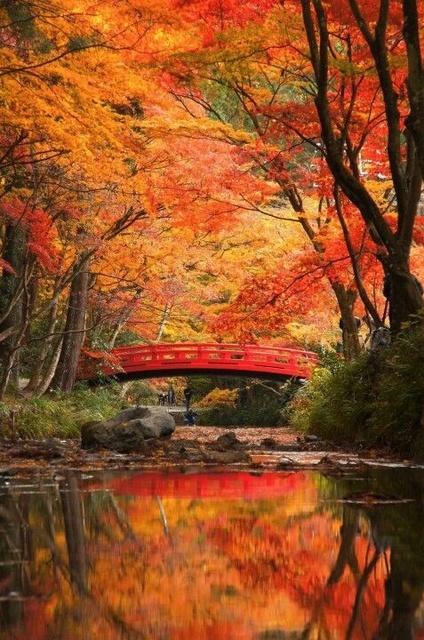 秋は「紅葉ネイル」で決まり♡暖色系カラフルデザインまとめ♪