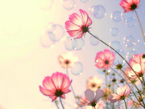 秋に咲くサクラ。秋のフラワーネイルは大人可愛い『コスモス』を描こう♡