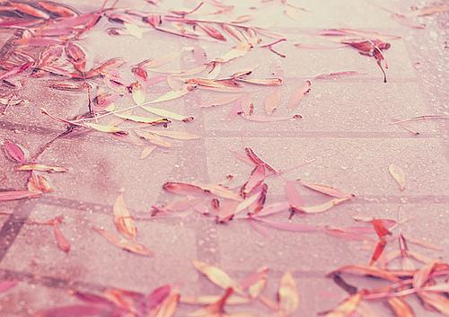 """秋こそ""""ピンク""""で大人ネイル♪バイカラーなら「大人可愛い」が叶う"""