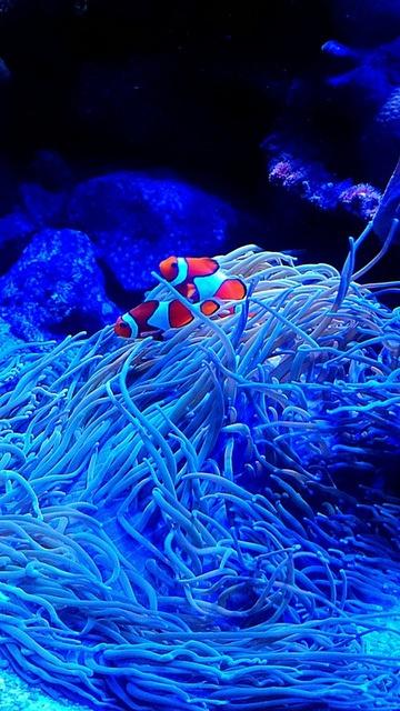 感動的な世界♪ナイトワンダーアクアリウムが新江ノ島水族館で開催!