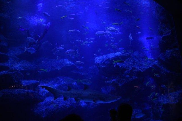 アフター5に最適!「ブルーナイトダイビング」がすみだ水族館で開催中!