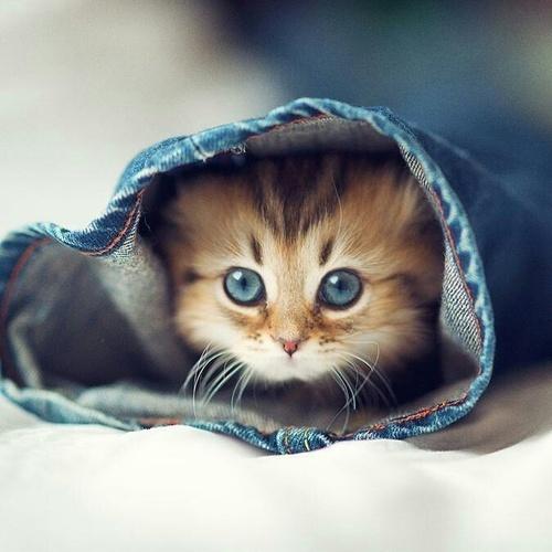 ブームに乗って♡「猫ちゃんネイル」を楽しんじゃおう