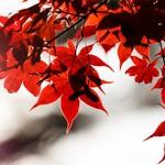 11月はどこに行く?関東地方で開催されるおすすめイベント3選!