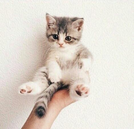 『猫モチーフネイル』が猫好きにはたまらない可愛さ♡