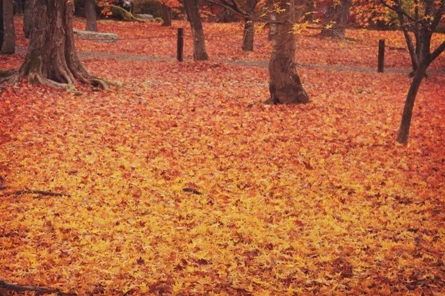 秋冬の迷彩柄ネイルで作るキュート/クールな指先
