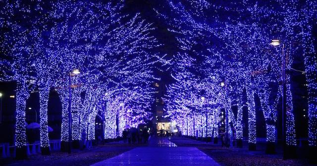 冬を彩るやさしい灯り♡渋谷・原宿・表参道で見るおすすめのイルミネーション5選