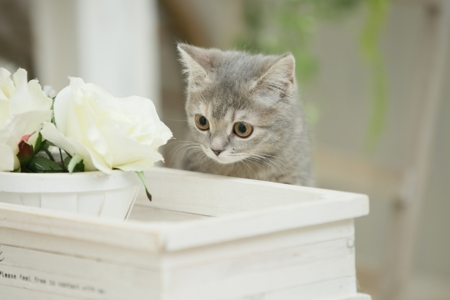 """癒し効果抜群の""""猫ネイル""""に注目♡"""